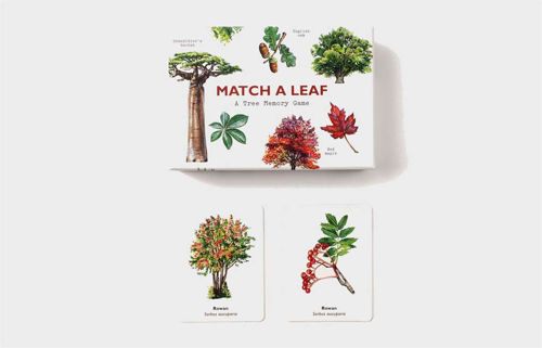 Match a Leaf Game, pairs or snap game, durable cards with botanic tree images, box cover depicts botanical tree images with a white background, Size: Box: (l) 14.5cm x (w) 10.7cm x (d) 5cm.